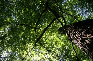 Der Wald als Klimaschützer